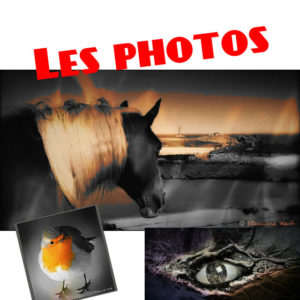 les photos